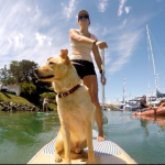 Best paddle boarding spots in San Diego